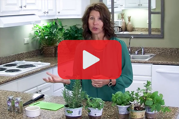 Herbs: Fresh and Dry